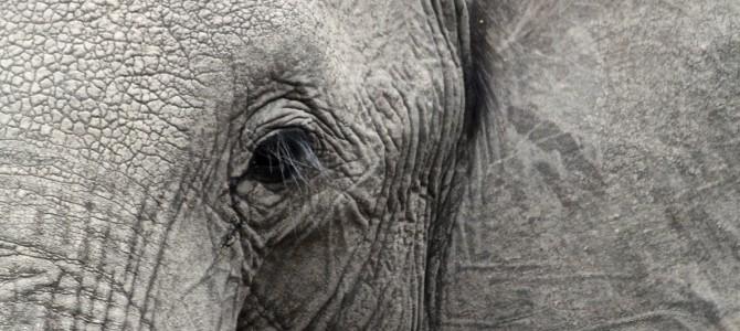 Gottes Elefant